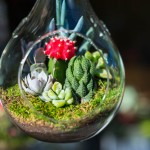 Mini-succulent and cactus in glass terrarium.
