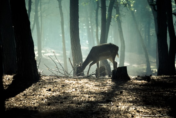 young deer posing in the forest, netherlands
